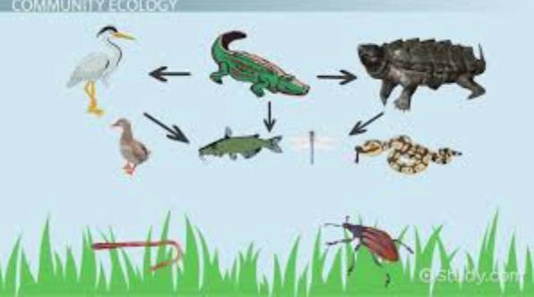 ecology_ostrom